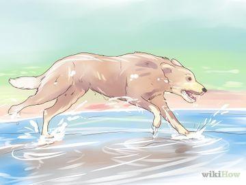 Care for a Skunk Sprayed Dog Step 1 Version 3.jpg