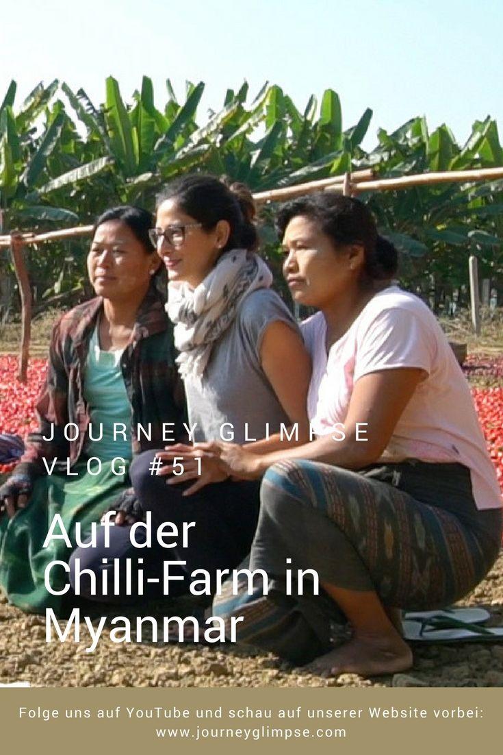 Vlog Nummer 51 bringt uns auf eine Chilli-Plantage in Myanmar.