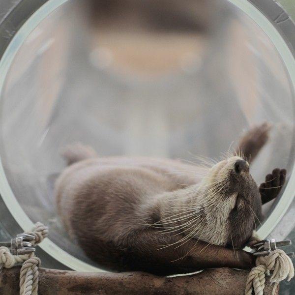 stretchy otter