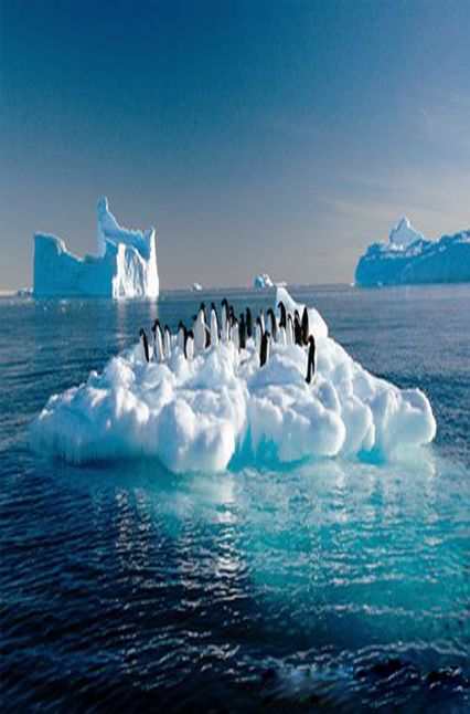 Antarctic penguins on ice floes. Global warming has threatened the survival of the polar animals.