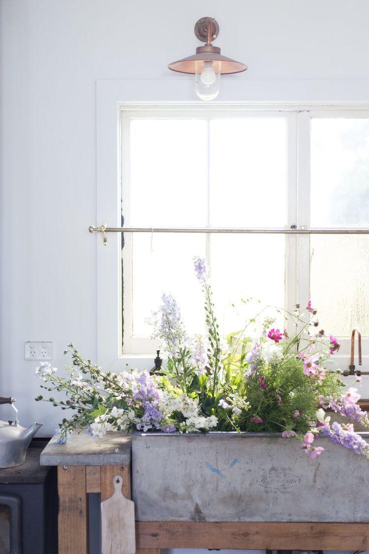 best flowers u plants images on pinterest flower power for