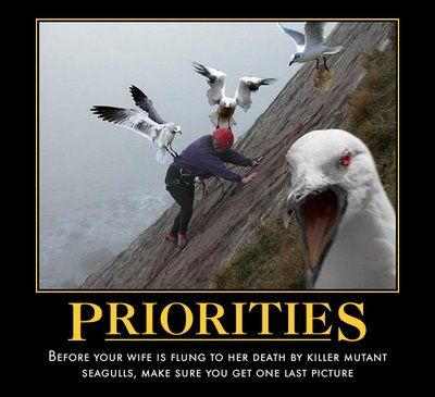 priorities meme lol memes funny animal pictures funny animals l pinterest