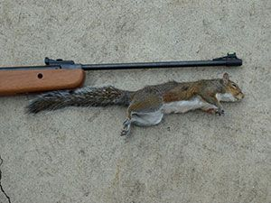 Top 3 Best Air Rifle for Squirrel Hunting – Reviews