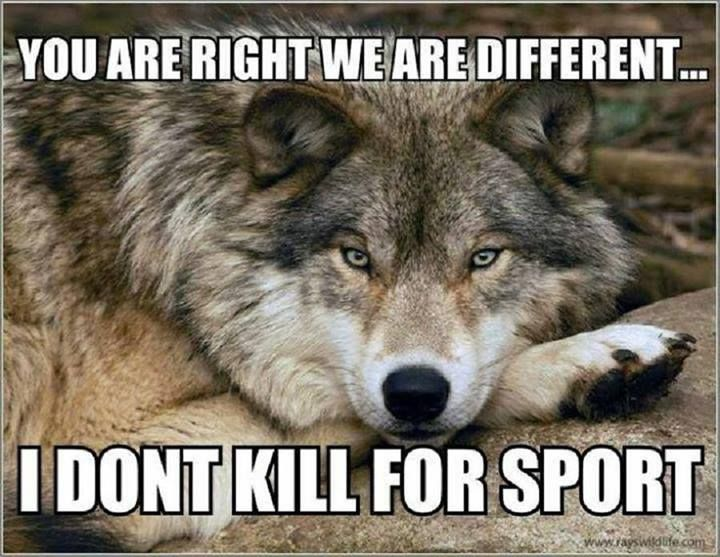That is right i don't kill for sport! Damn people that do!