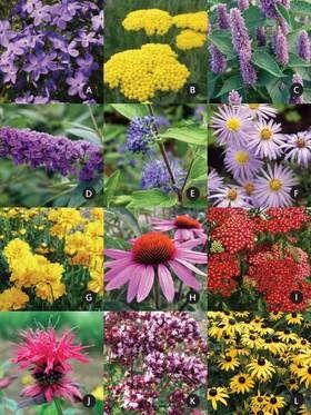 Butterfly Garden (Garden Design And Plants)