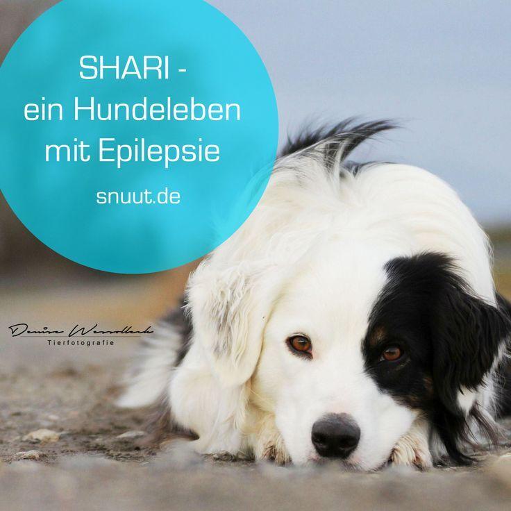 Shari – ein Hundeleben mit Epilepsie...