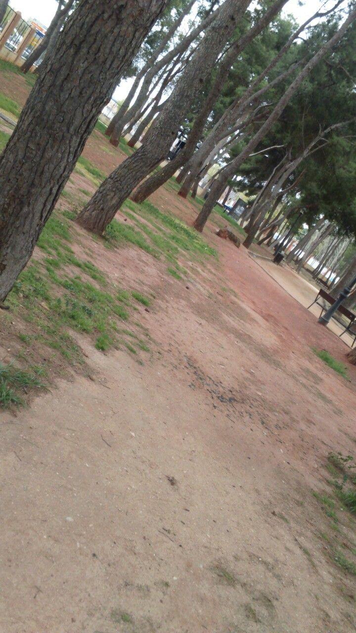 Día 22, árboles