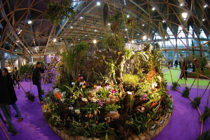 #Orchidee preziose sotto la #Cupola #LerianSrl. #orchids #domes