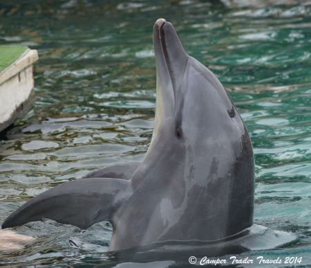 Seaworld offers interactive Dolphin experiences.