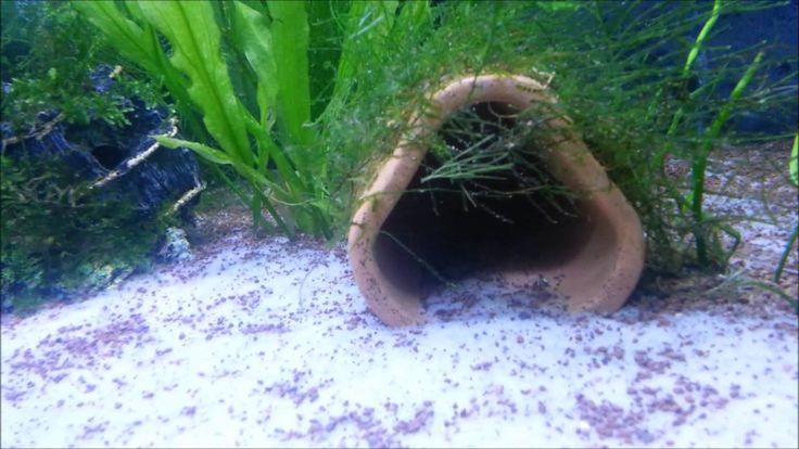 tatlı su akvaryumu, freashwater tank