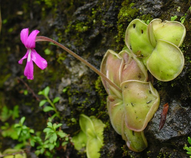 136 best native plants of mexico images on pinterest
