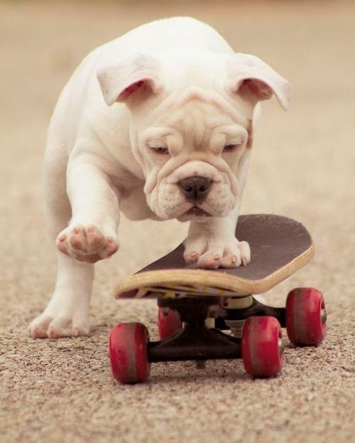 I'm going to get a dog, just to teach him this... #skateon #rollalong http://top10dogpictures.com/17-funny-dog-pictures-that-will-make-you-laugh.html                                                                                                                                                     More