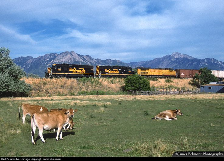 Image result for abandoned train yard with grazing cattle and a mountain in the background