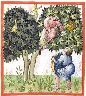 Botanical - Medieval -  Horticultural practices -  (11)