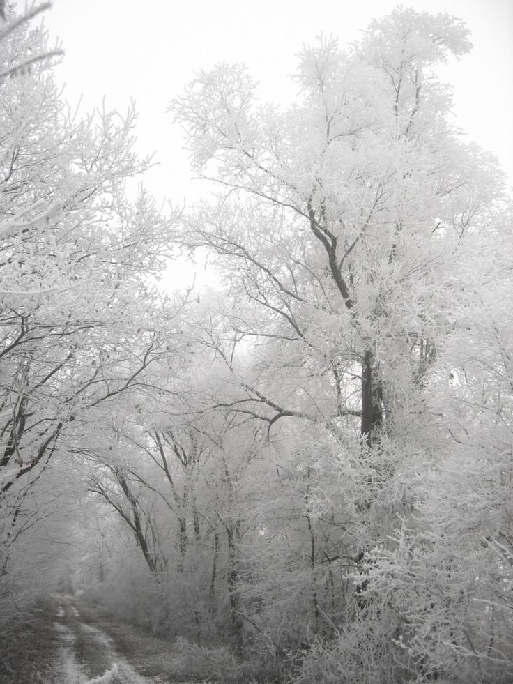 Winter, Hoarfrost, Cold, Frost, Tree, Leaves, Branches Photo - Visual Hunt