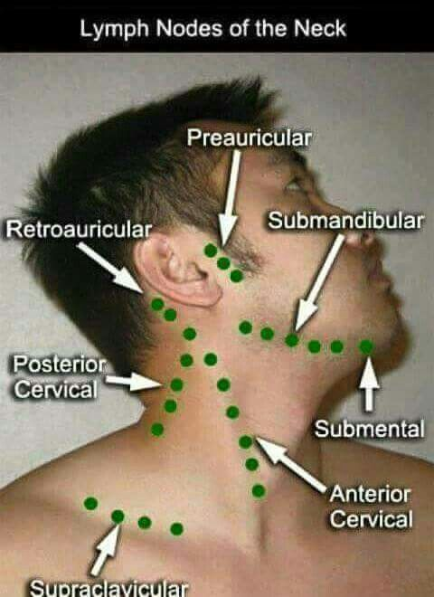 Lymph nodes of the neck *.*