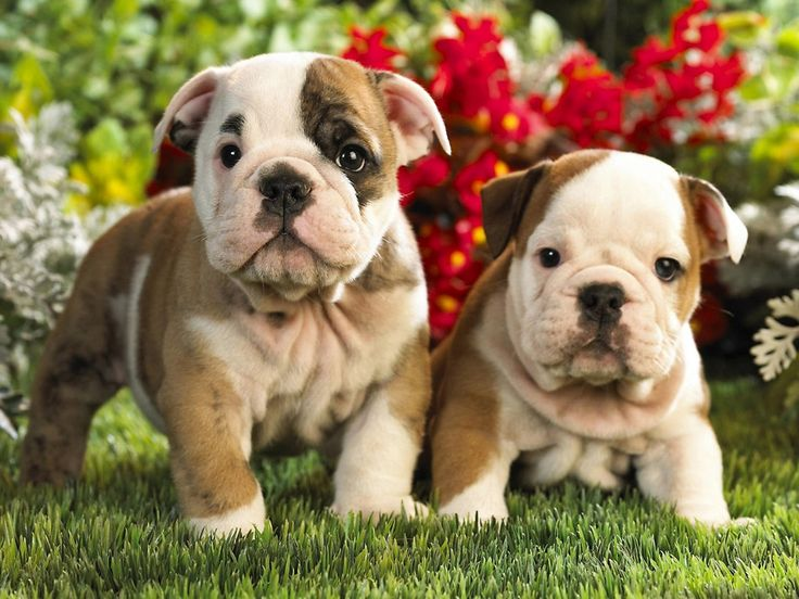 One is cute ~ two is just OMG how much bully love can you stand?!?