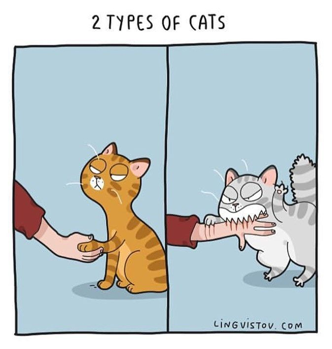 Lingvistov Com Lingvistov Cat Catsofinstagram Lovecats