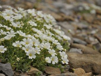 Rośliny na skalniak - zobacz co posadzić na skalniaku?