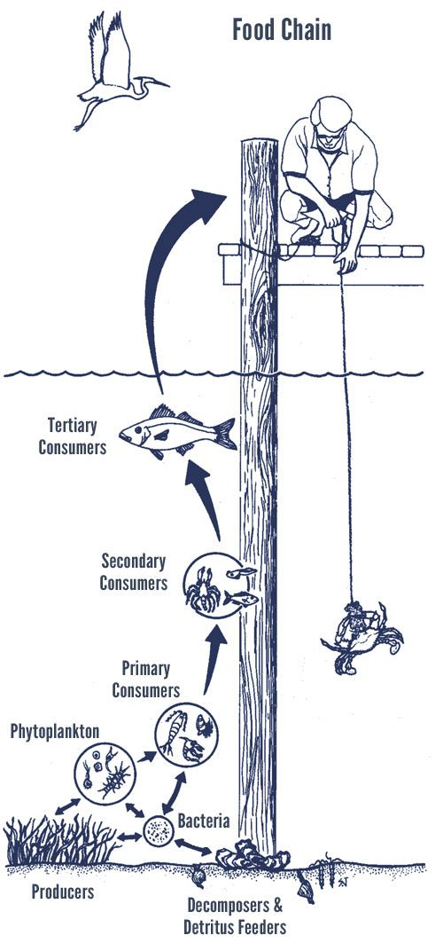 The 141 Best Ecology Energy Flow Food Webs Images On Pinterest