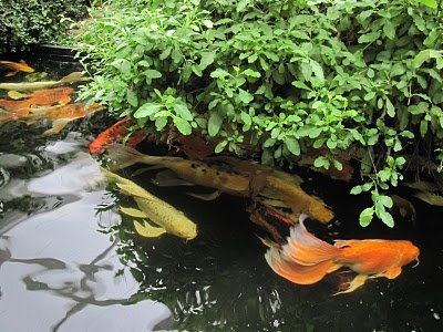 how to grow big bass in a small pond