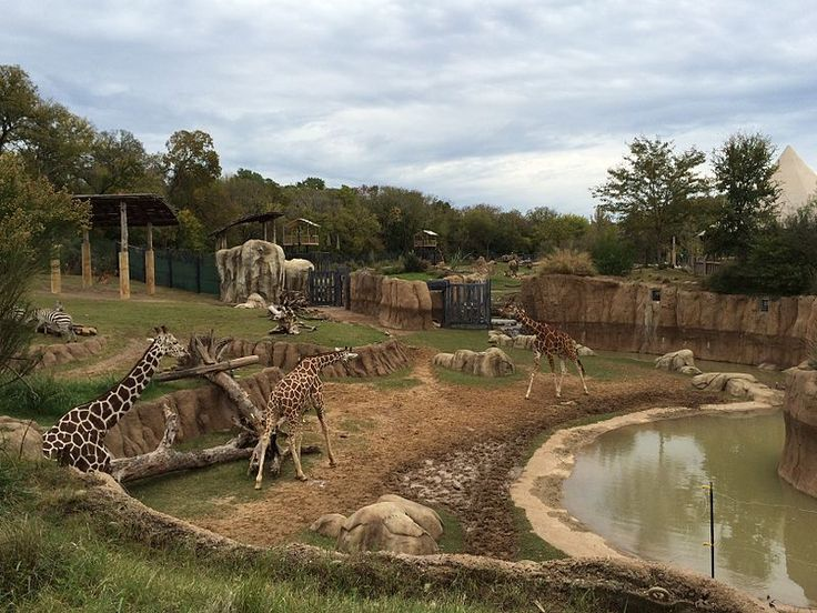 Dallas Zoo is Largest Zoo in Texas
