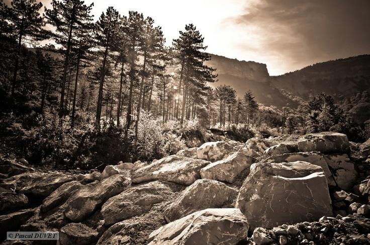Sur les pentes de la Montagne de Lure - Alpes de Haute Provence 04