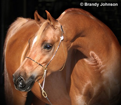 Brandy Johnson 2007 Equine Ideal Online Photography Contest