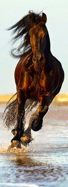 ...liegt auf dem Rücken der Pferde