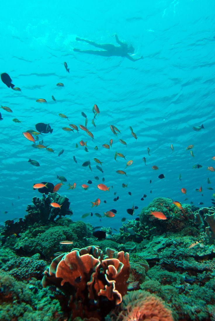 Crystal clear visibility on Gili Trawangans dive site Halik