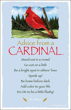 Image result for advice from a cardinal