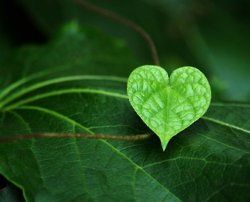 .: Heart Open, Valentines, Beautiful, Soul, Leaves, Living, Inspiration Quotes, Everywh, Open Heart