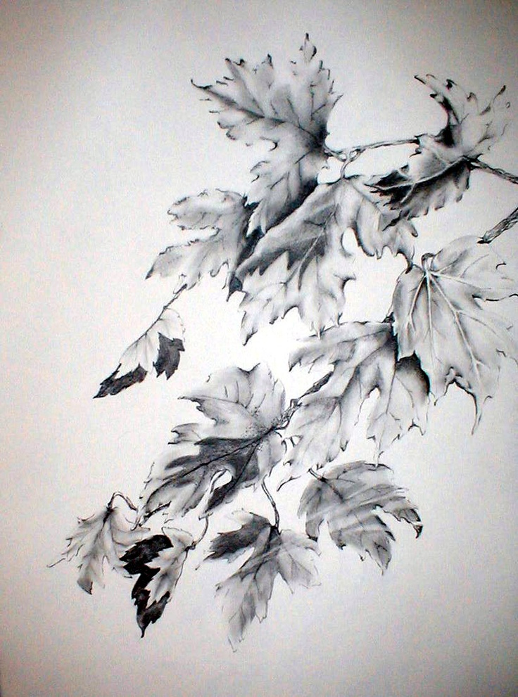 67 best images about Drawing trees & leaves on Pinterest ...