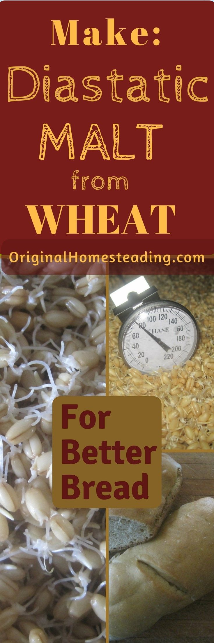 Diastatic Malt aids in Bread Making. It acts like a dough conditioner giving the bread more elasticity, better rising capability and a nice brown crust. Learn How to Make and Use Diastatic Malt.