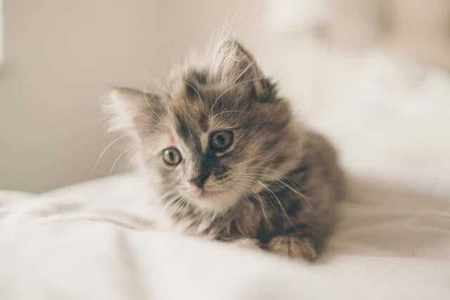 WinNetNews.com - Pasti kamu sering berpikir kalau anjing lebih tunduk pada majikannya daripada kucing. Memang, anjing sering sekali mengikuti majikannya kemanapun ia pergi, seringkali kita melihat anjing berlari dan bermain bersama majikannya. Sedangkan kucing sering menghabiskan waktu di tempat tidur.