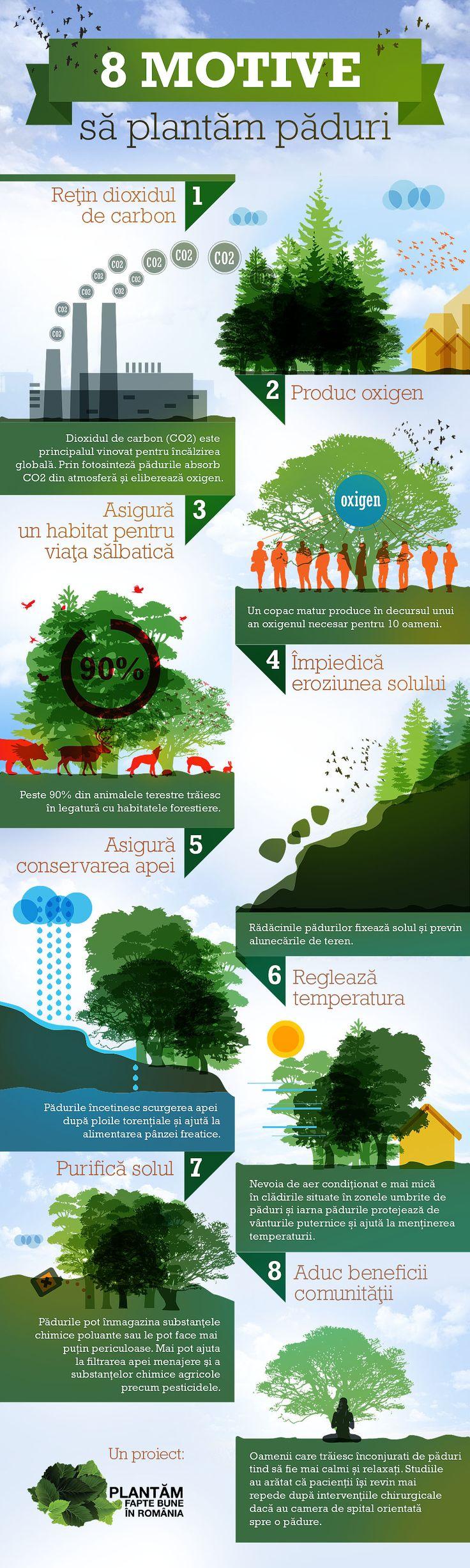 infografic 8 motive sa plantam paduri