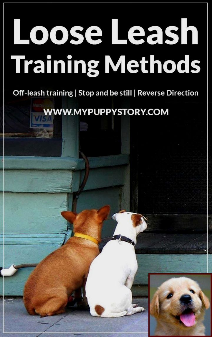 House Training A Rottweiler Puppy And House Training A Puppy Mill