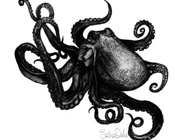 black and white octopus art | Octopodes | Pinterest