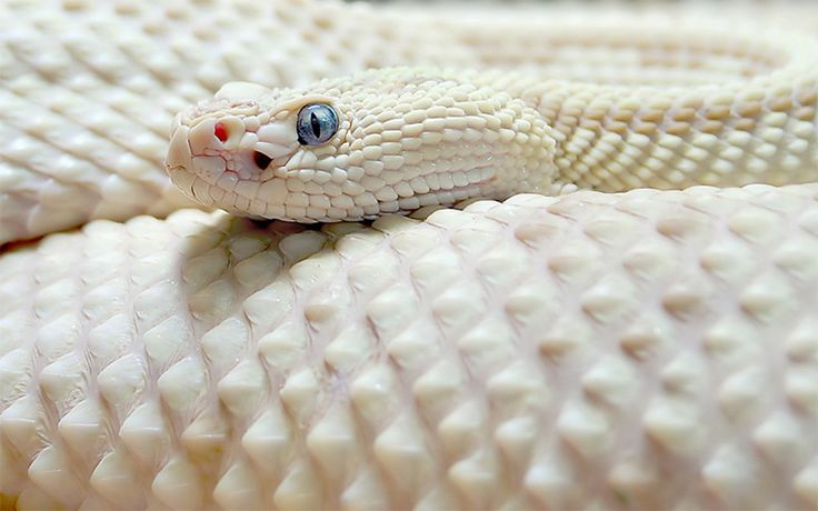 A beleza dos animais albinos