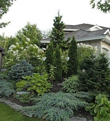 Best 8 Evergreen Tree Landscaping Ideas