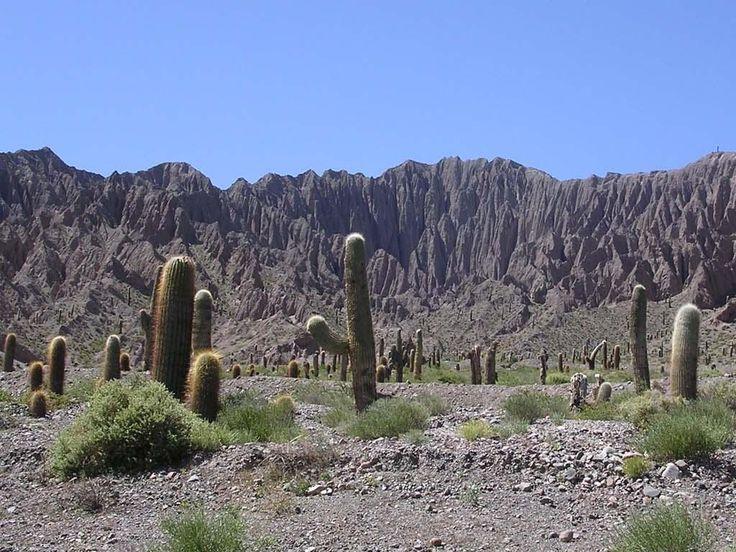 Argentina Salta. Cactus