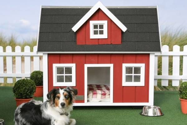 CuteDog House Decoration Ideas, Bright Accents for Backyard Designs