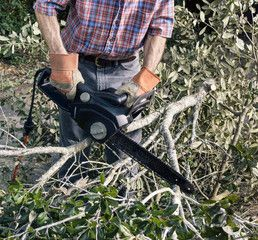 Approaches To Find The Best Roswell Cutting Tree Branches Company