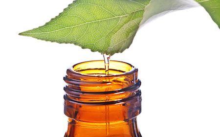 Egenskaper av eterisk eukalyptusolja som du kan ha stor nytta av.