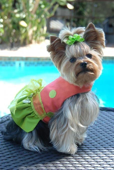 Classy Doggie Designs Model Millie La Rue