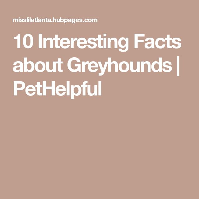 10 Interesting Facts about Greyhounds | PetHelpful