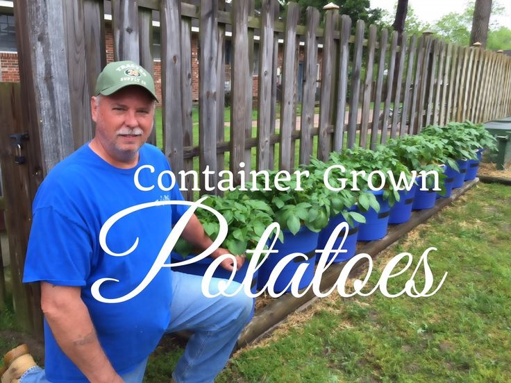 HD How To Grow Potatoes In Containers (Part 2 Of 2)   Subscription FREE