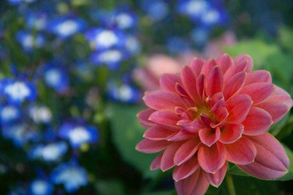 Contrasts Flower Photography Orange Flower Summer by garcisssa, $10.00