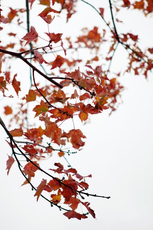 <3Fall Leaves, Fall Colors, Autumn Lights, Autumn Leaves, Fall Autumn, Autumn Beautiful, L Été Indien, Autumn Abundance, Autumn Whisperer