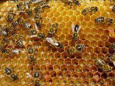 πρόπολη μέλισσες μέλι